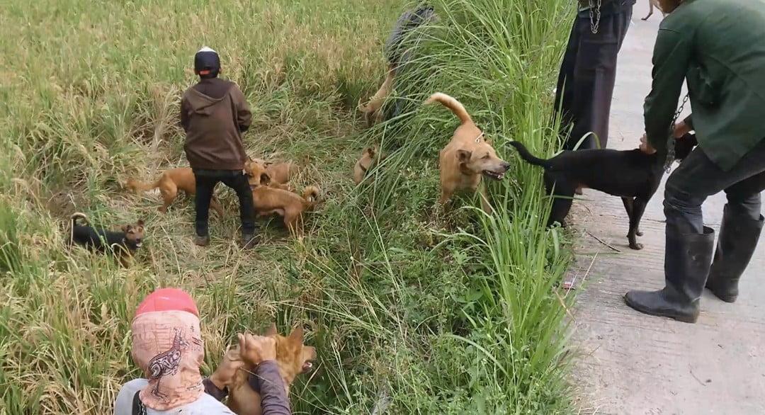 Komunitas Ajag Resing Banjaran Bandung Buru Babi