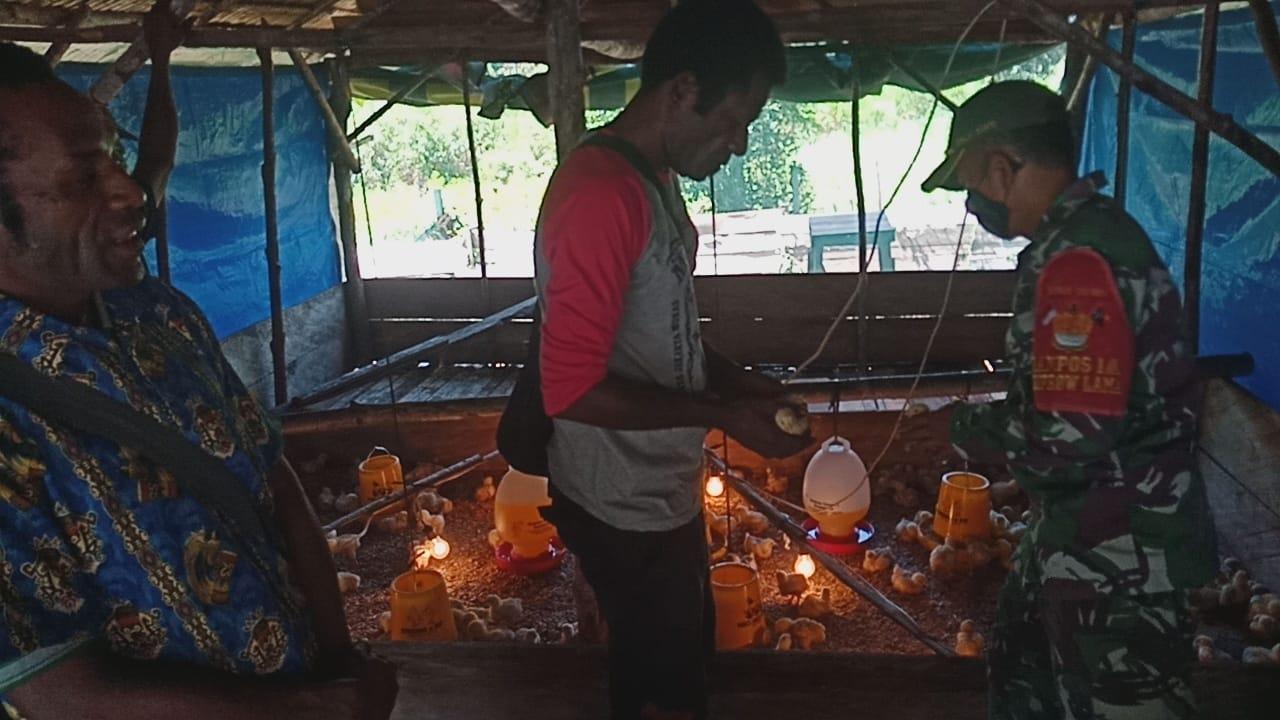 Satgas Pamtas Yonif 131 Beri Penyuluhan Berternak Ayam Potong di Papua 2