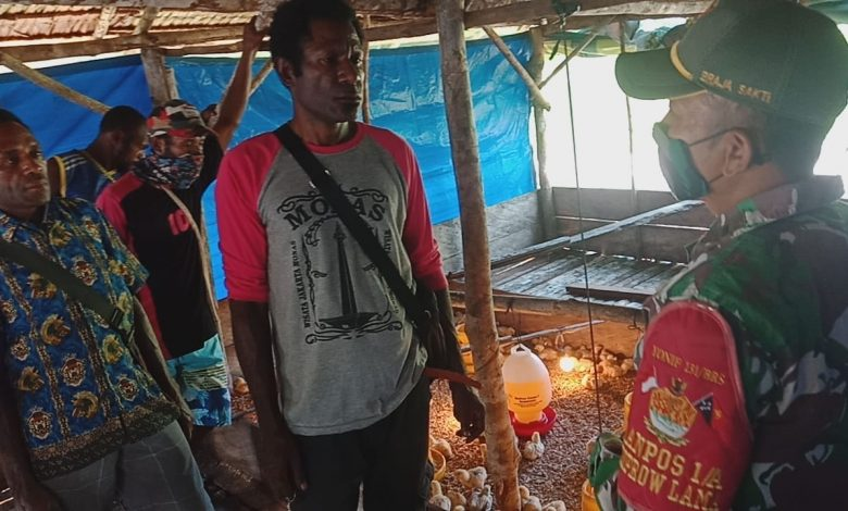 Satgas Pamtas Yonif 131/Brs Beri Penyuluhan Kepada Warga Tentang Berternak Ayam Potong di Papua
