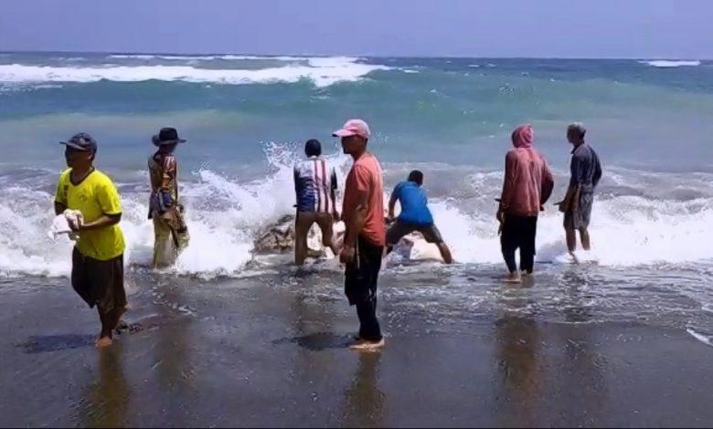 Ikan Hiu Terdampar di Pantai Sindangbarang Seberat 2 Ton