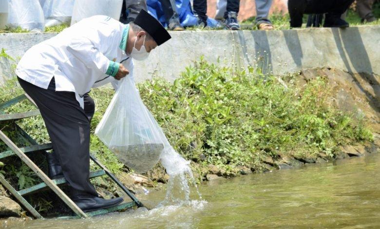 Sungai Surakatiga Kuningan Ditabur 100.000 Ikan