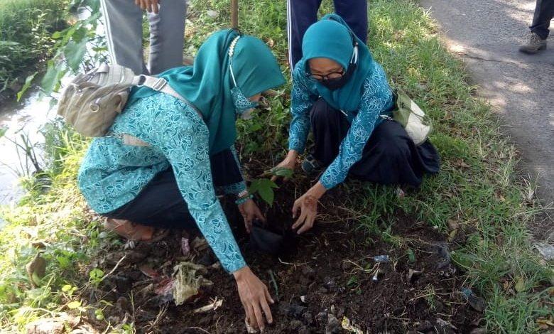 TP PKK Bojongpicung Cianjur Tanam Pohon Picung
